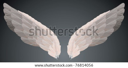 wings   vector   isolated