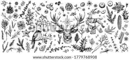 Winter forest hand drawn vector. Vintage Christmas plants. Sketched collection of woodland line evergreens. Design elements: conifer branches, deer, bullfinch, mistletoe, cones, pine illustrations.