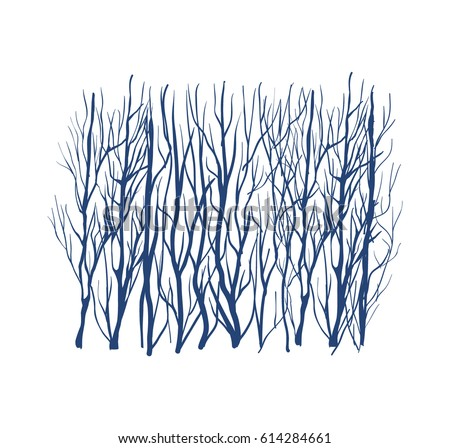 winter forest silhouette  blue