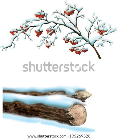 winter tree  branches with