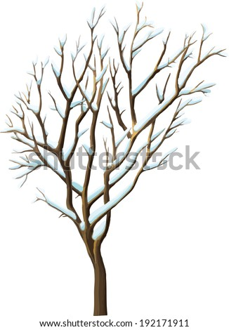 winter tree   isolated on white