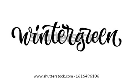Wintergreen - vector hand drawn calligraphy style lettering word. Isolated script spice text label. Labels, shop design, cafe decore etc