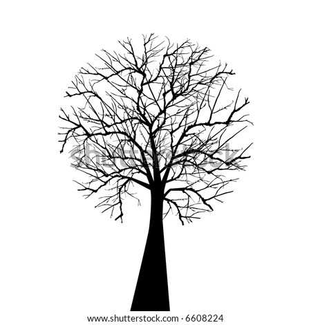 wintertree isolated