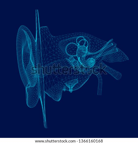 Wireframe of the internal structure of the human ear. 3D. Front view. Vector illustration