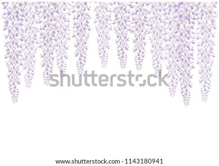 wisteria flower japanese style