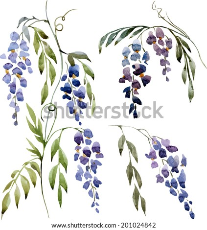wisteria painting watercolor