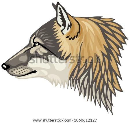 wolf head profile  the gray