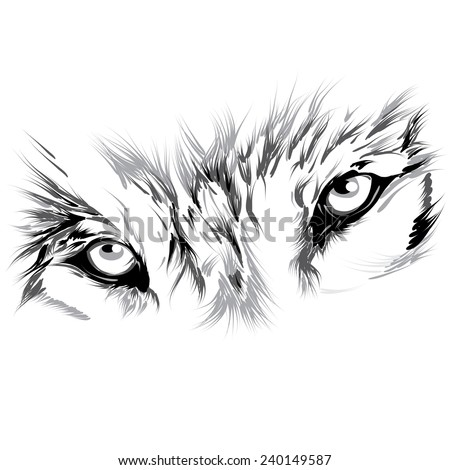 wolf's face