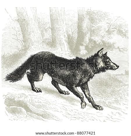 wolf   vintage engraved