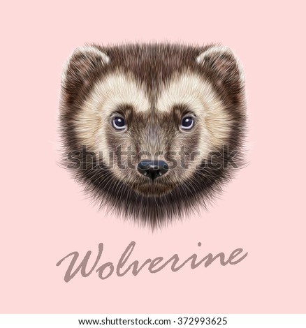 wolverine animal vector