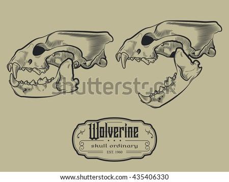 wolverine skull engraving style