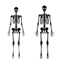 Woman and man skeleton anatomy in front view. Vector black isolated flat illustration of human skull and bones. Halloween, medical, educational or science banner.