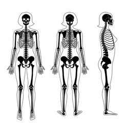 Woman skeleton anatomy in front, profile and back view. Vector isolated flat illustration of human skull and bones in female body. Halloween, medical, educational or science banner.
