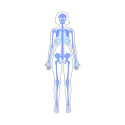 Woman skeleton anatomy in front view. Vector isolated flat illustration of human skull and bones in female body. Halloween, medical, educational or science banner.