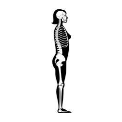 Woman skeleton anatomy in side profile view. Vector isolated flat illustration of human skull and bones in female body. Halloween, medical, educational or science banner.