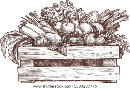 Wooden box with vegetables,vector hand drawing