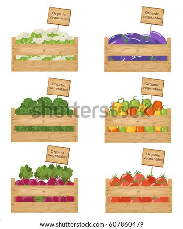 Wooden boxes of vegetables. Organic vegetables. Vector illustration.