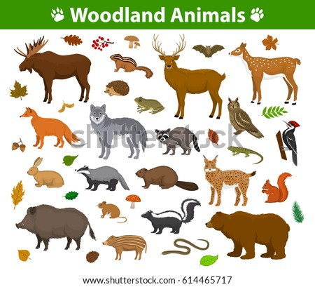 woodland forest animals birds