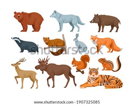 Woodland forest animals. Cute wild forest animals deer, wolf, brown bear, common fox, badger, sable, chipmunk, ussuri tiger, rabbit, hare, elk, wild boar, squirrel flat cartoon vector
