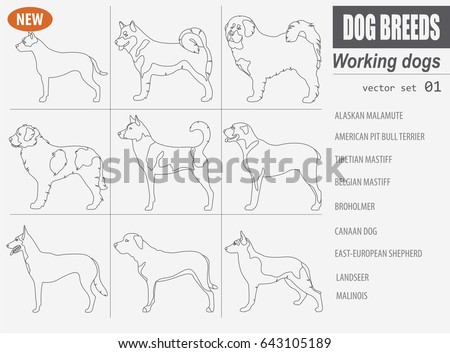 working  watching dog breeds