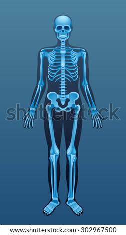 x ray skeleton