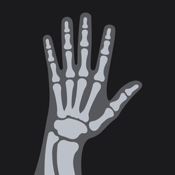 X Rays Style Human Hand. Vector