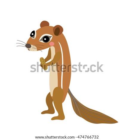 xerus african ground squirrel