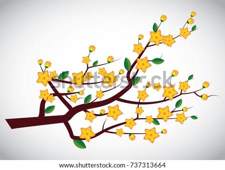 yellow apricot flowers  ochna