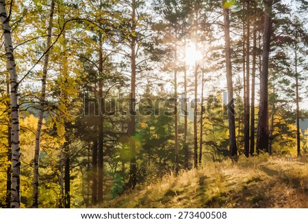 yellow autumn forest at sunset