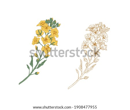 yellow colored canola flower