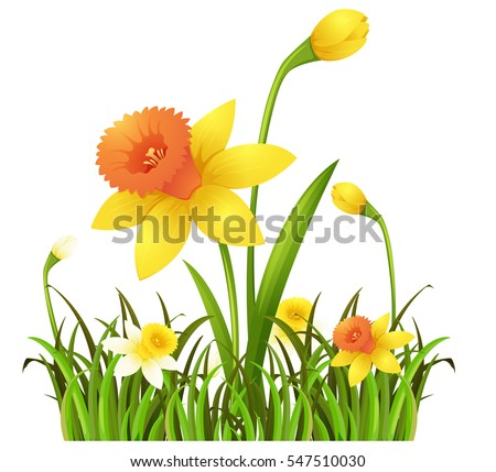 Yellow daffodil flowers in the bush illustration