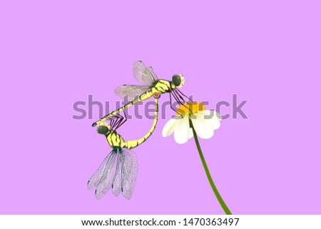 yellow dragonflies breed on