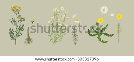 Yellow Herbarium