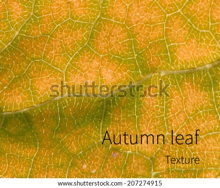 yellow leaf texture vector