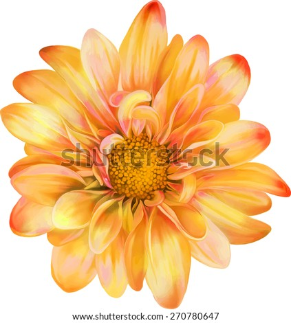yellow orange chrysanthemum