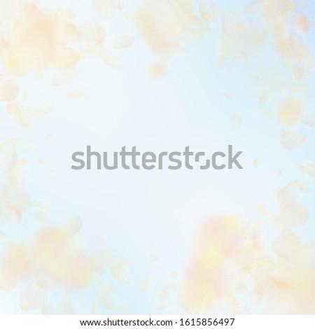 Yellow orange flower petals falling down. Juicy romantic flowers vignette. Flying petal on blue sky square background. Love, romance concept. Cute wedding invitation.
