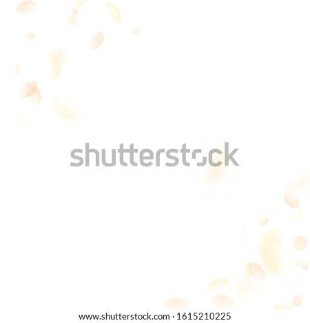 Yellow orange flower petals falling down. Mesmeric romantic flowers corner. Flying petal on white square background. Love, romance concept. Alluring wedding invitation.