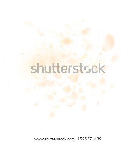 Yellow orange flower petals falling down. Trending romantic flowers explosion. Flying petal on white square background. Love, romance concept. Attractive wedding invitation.