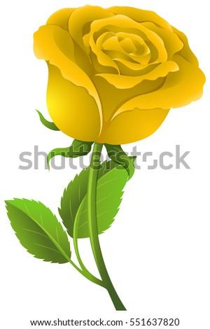 yellow rose on green stem