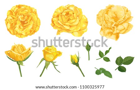 yellow roses with bud and