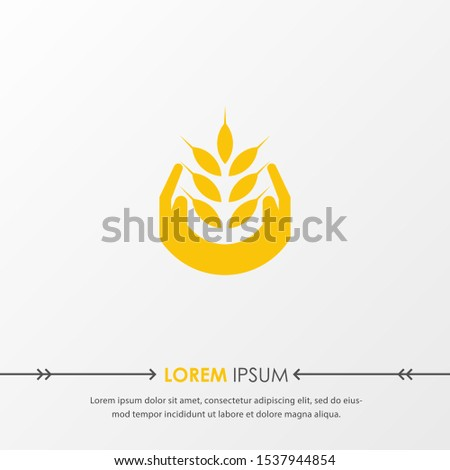 yellow wheat oat agriculture