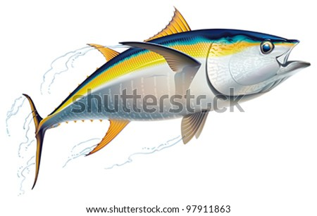 Yellowfin tuna in fast motion. Realistic vector illustration.