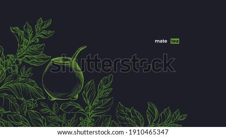 Yerba mate. Green plant set, calabash. Vector fresh bush, sketch leaves, organic plantation. Art hand drawn illustration. Healthy traditional herb tea drink  Stockfoto ©