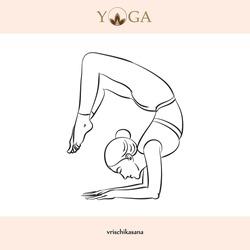 yoga asana poses with names vector illustration