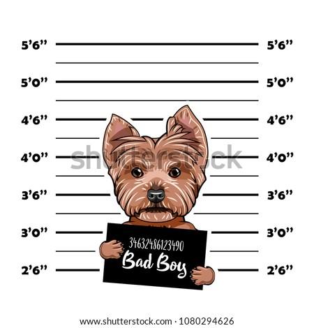 yorkshire terrier criminal
