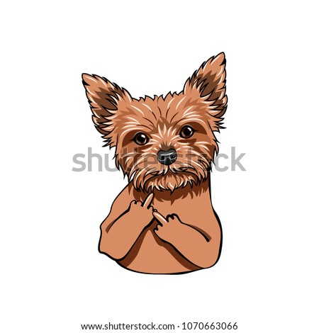 yorkshire terrier dog middle