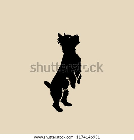Yorkshire terrier - isolated vector illustration