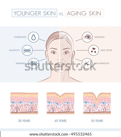 Young healthy skin and older skin comparison, skin layers and wrinkles diagram