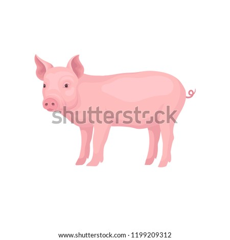 Young piglet standing isolated on white background. Domestic animal. Pink farm pig with swirling tail, flat snout and hooves