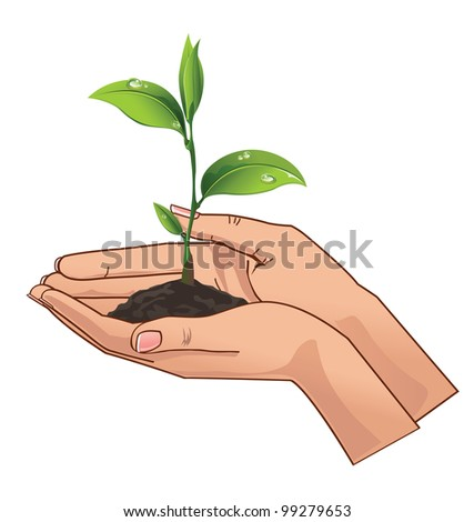 Young seedling in hands